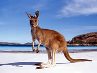 Australia Tour Packages from Delhi