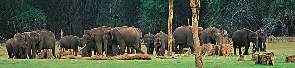 Kerala Wildlife, Kerala Wildlife Tourism, Kerala Wildlife Tour Packages, Kerala Wildlife Tours